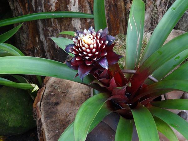 Orchideeën Hoeve - pépinière et jardin d'orchidées A5brom10