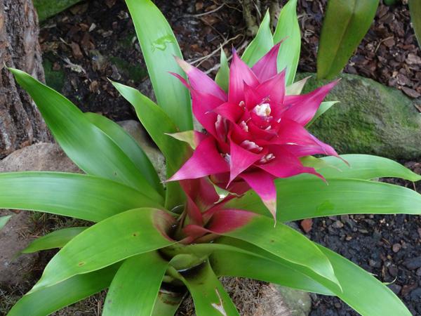 Orchideeën Hoeve - pépinière et jardin d'orchidées A6brom10