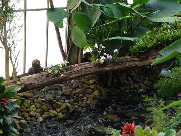 Orchideeën Hoeve - pépinière et jardin d'orchidées A810