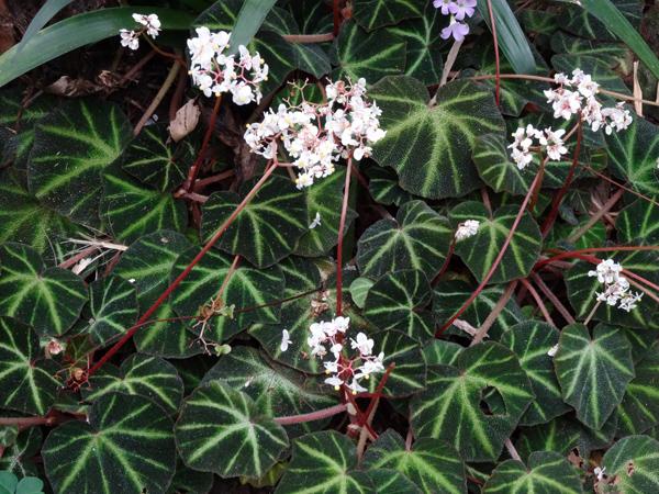 Orchideeën Hoeve - pépinière et jardin d'orchidées Begoni11