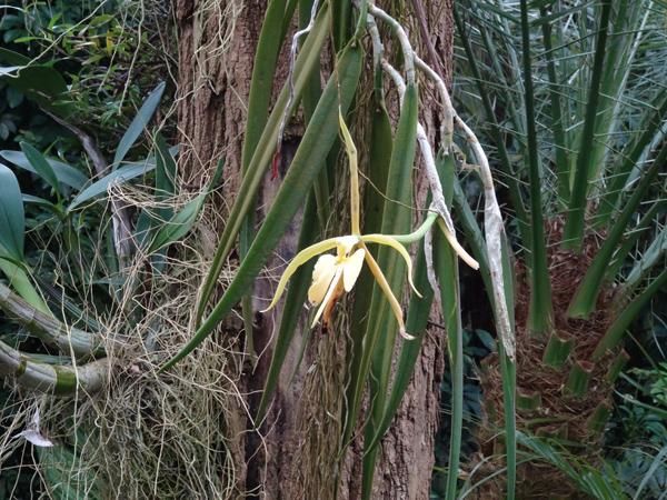 Orchideeën Hoeve - pépinière et jardin d'orchidées Dendro18