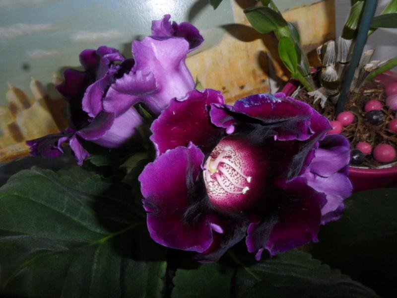 Floraisons d'intérieur  - Page 5 Sam_3715