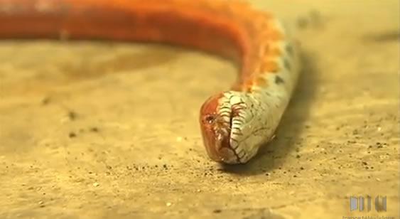 Le Python est-il mort ? Pithon10