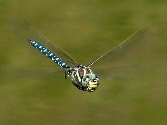 Le monde merveilleux des insectes - Page 2 20348210