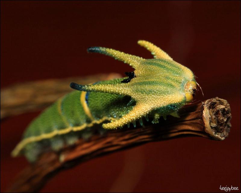 Le monde merveilleux des insectes Chenil10