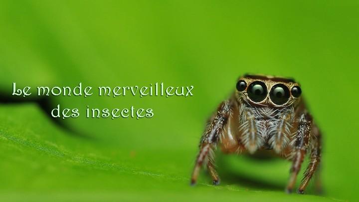 Le monde merveilleux des insectes - Page 2 Fonds-10