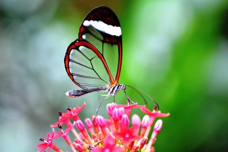 Le monde merveilleux des insectes - Page 3 Greta-10