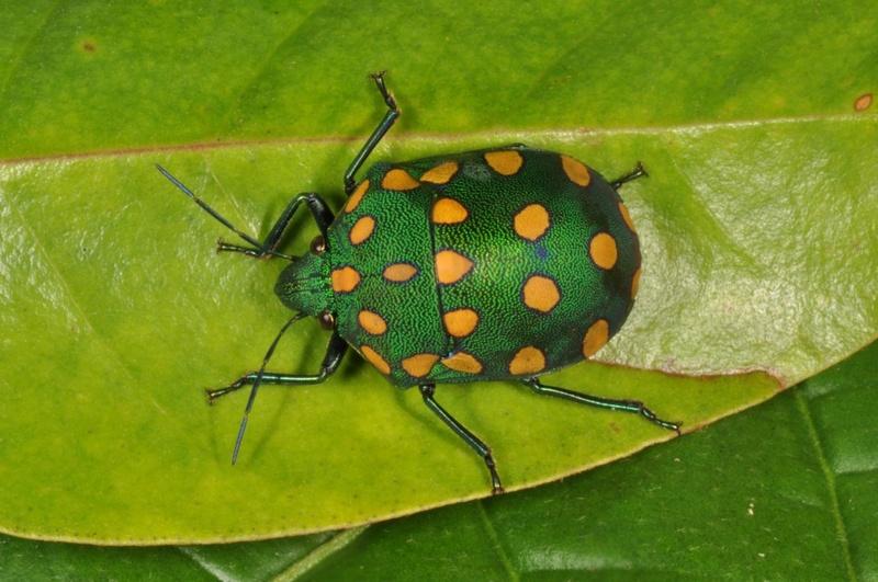 Le monde merveilleux des insectes - Page 2 Insect10
