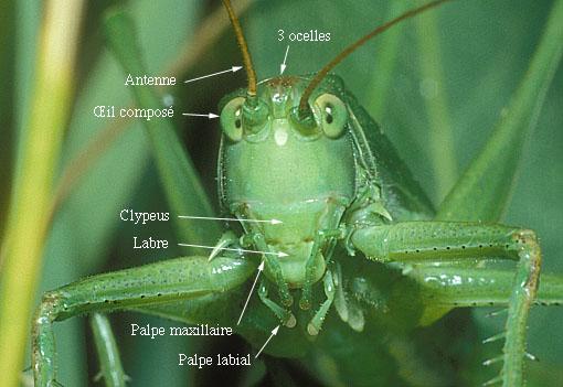 Le monde merveilleux des insectes Tetein10