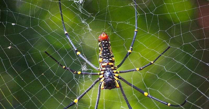 Le monde merveilleux des insectes Une-to10