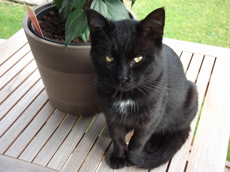 MOKA, très beau petit matou de 1 an à la robe noire Dscf2410