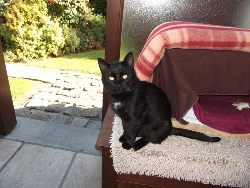 MOKA, très beau petit matou de 1 an à la robe noire Dscf2414