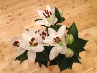Lys lilium en fleurs ... Img_0428