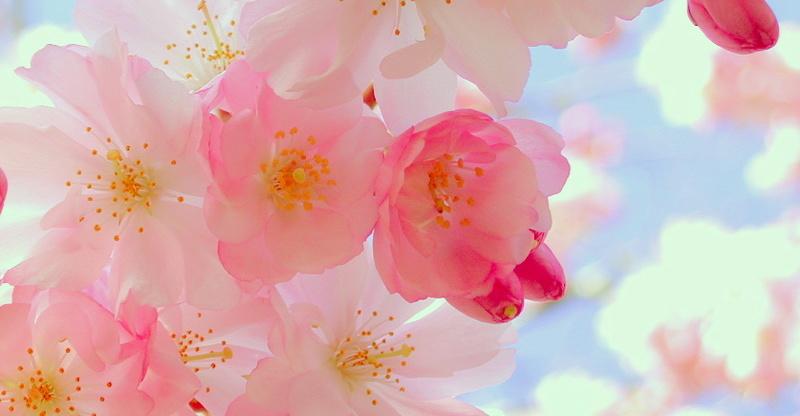 Bonjour, Bonsoir. - Page 89 Fleurs10