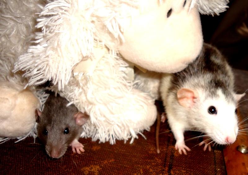 Cookie et Speedy, les ptits husky - Page 2 Dsc03716