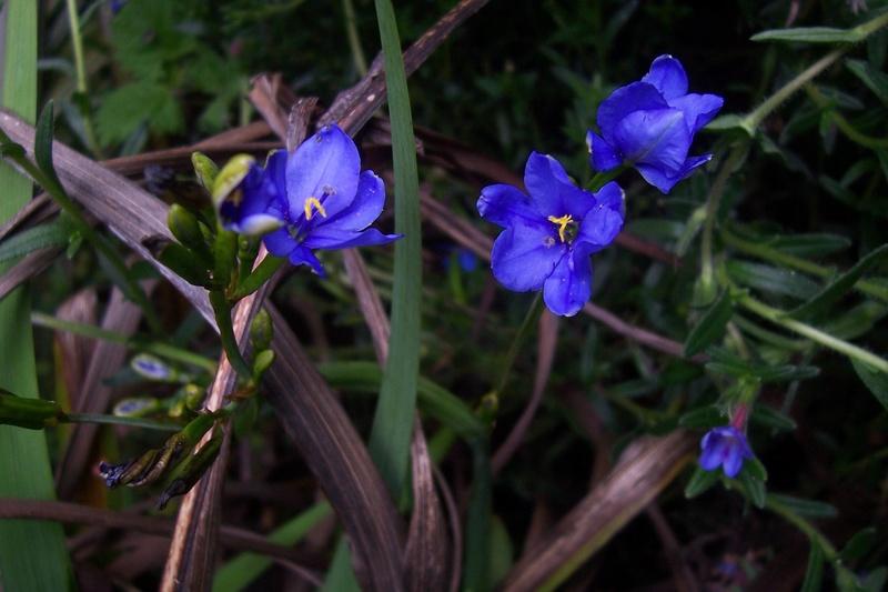 ces quelques fleurs de nos jardins 100_8411