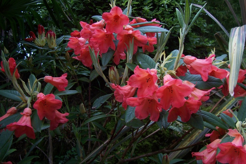 ces quelques fleurs de nos jardins 100_8412