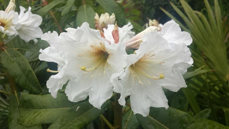 ces quelques fleurs de nos jardins - Page 2 20170610