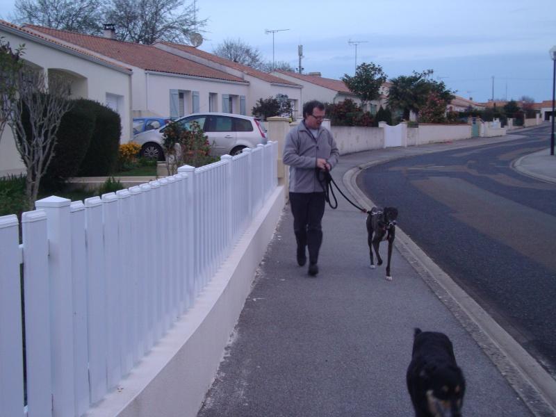 Galga Chispa residencia Cobie SCOOBY FRANCE ADOPTEE - Page 8 Dsc04519