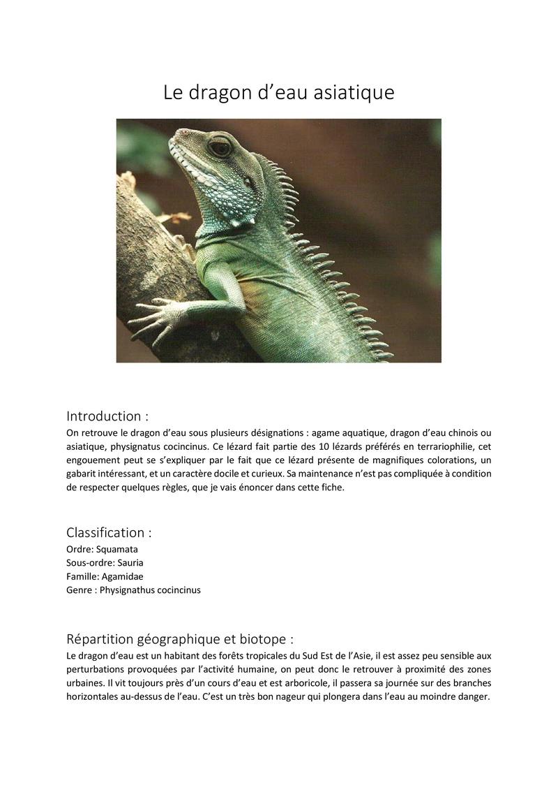 Le dragon d'eau / physignatus cocincinus Fiche_10