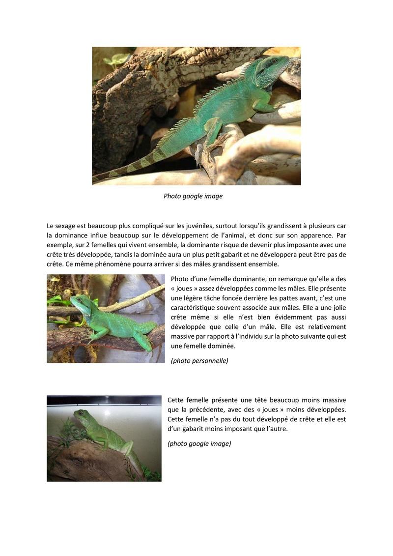Le dragon d'eau / physignatus cocincinus Fiche_11