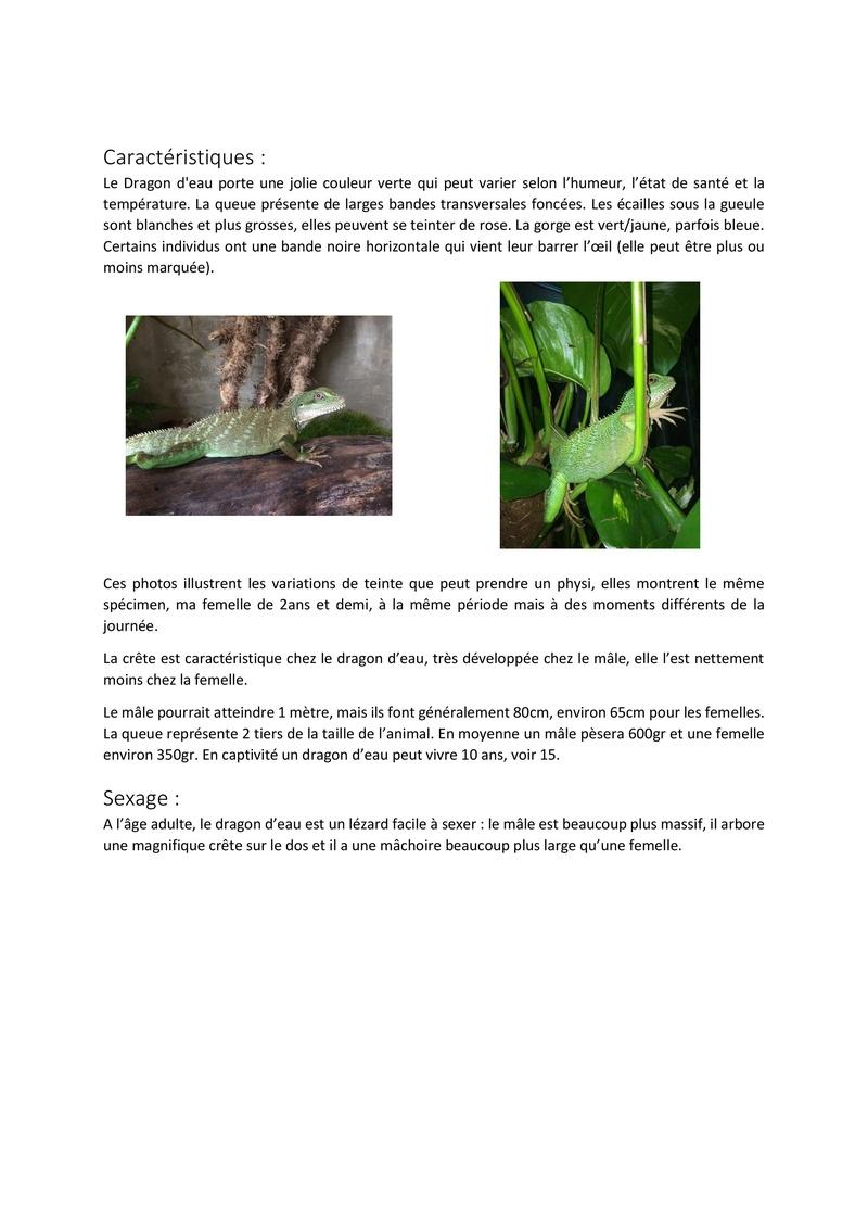 Le dragon d'eau / physignatus cocincinus Fiche_12