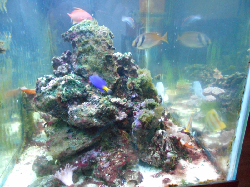 Pictures of tanks and fish 00610