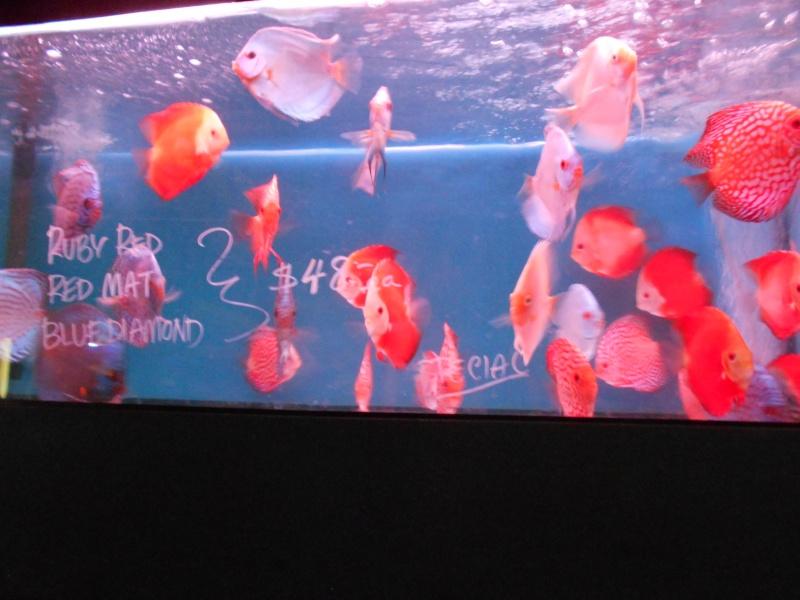 Toronto Aquarium 01610