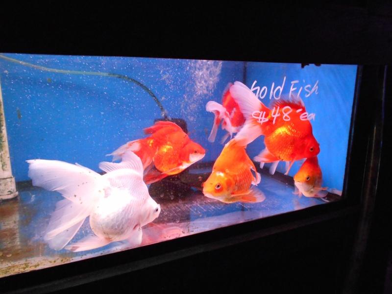 Toronto Aquarium 01710