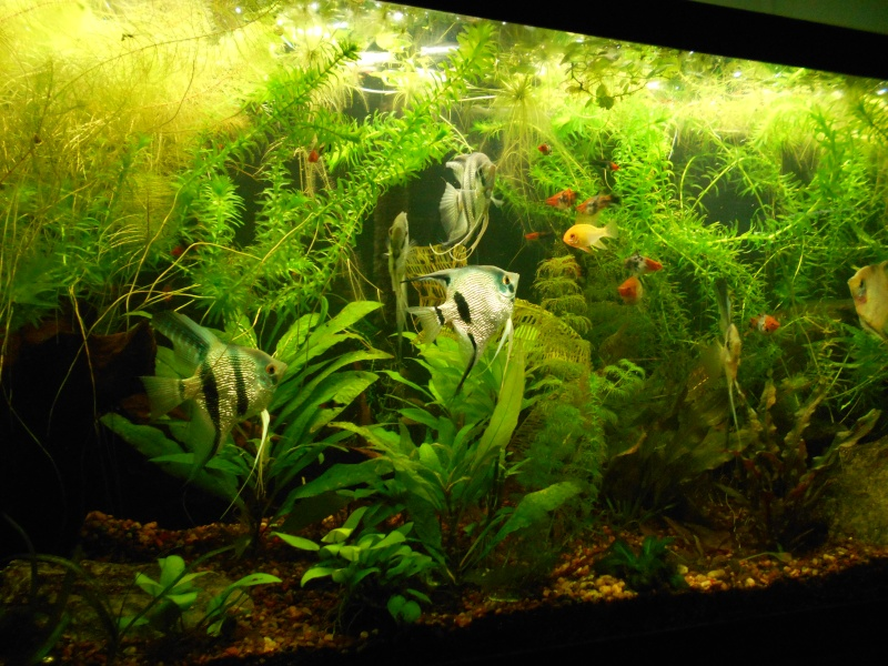 Pictures of tanks and fish 01810