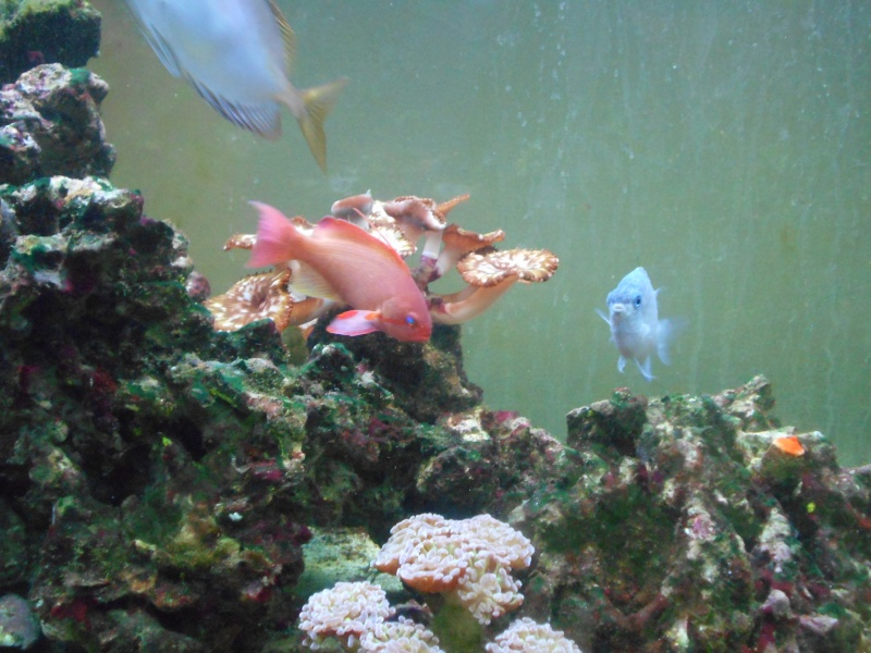 Pictures of tanks and fish 01811