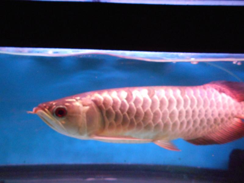 Toronto Aquarium 02112