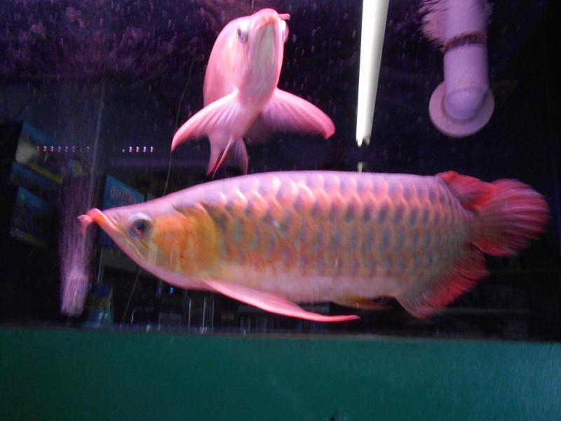 Toronto Aquarium 02810