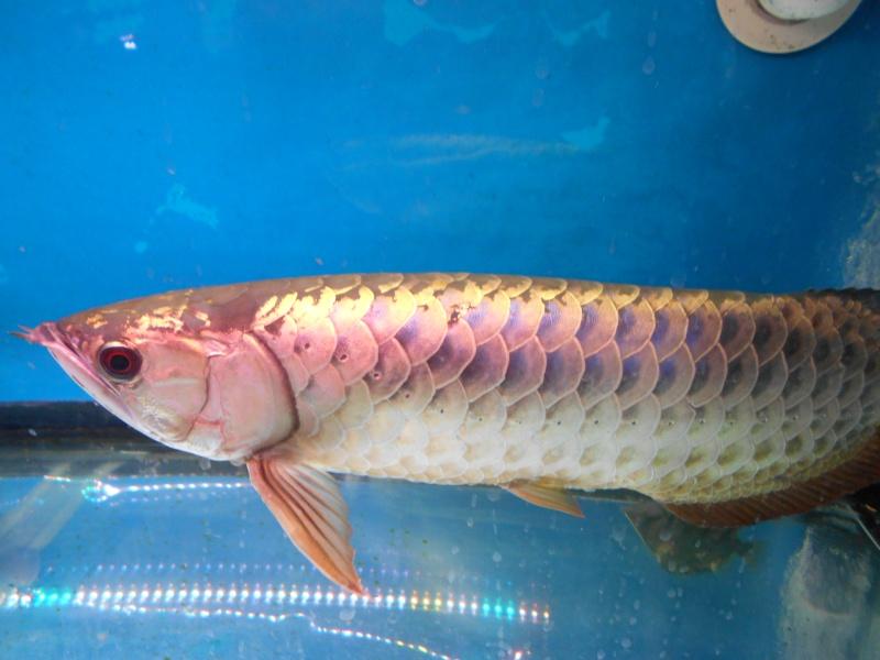Toronto Aquarium 03010