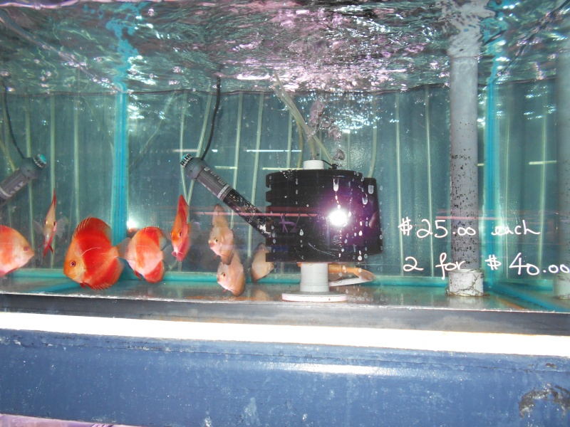 Toronto Aquarium 03110