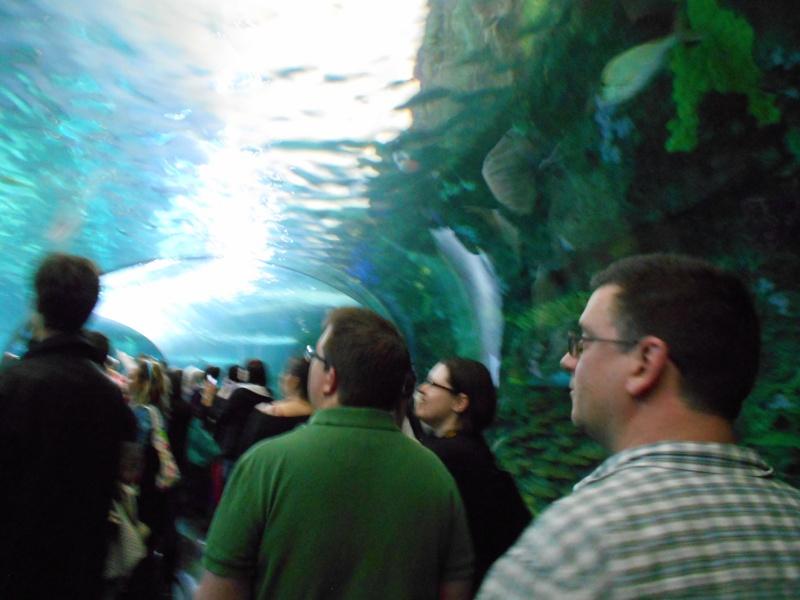 Toronto Aquarium 07710