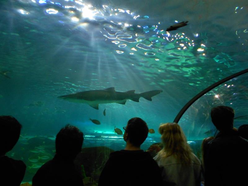 Toronto Aquarium 08110