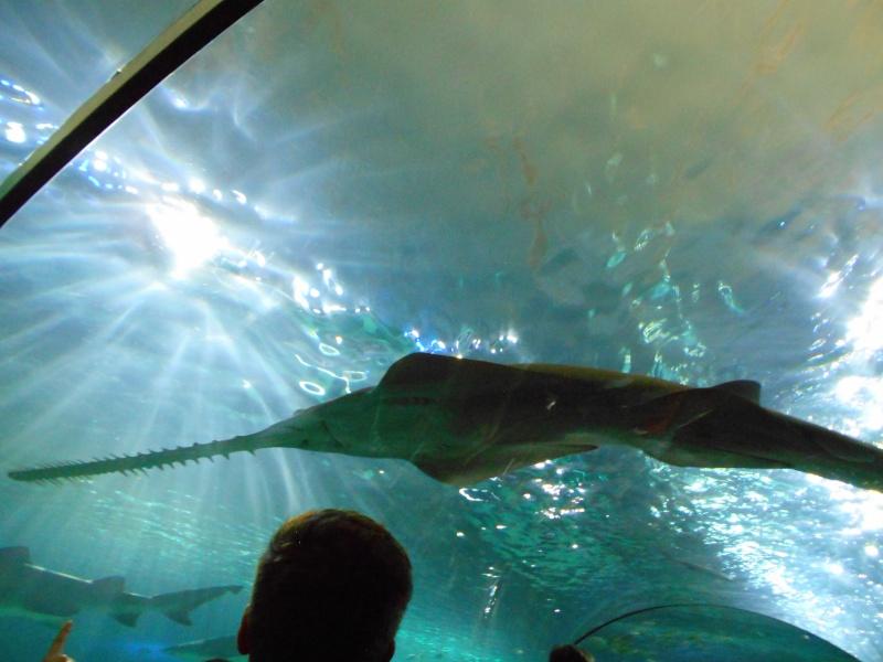 Toronto Aquarium 08510