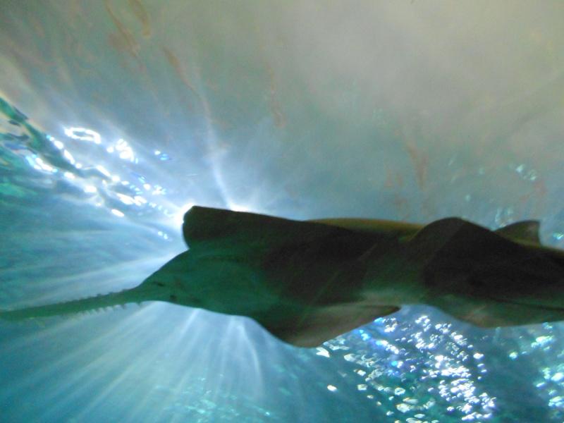 Toronto Aquarium 08710