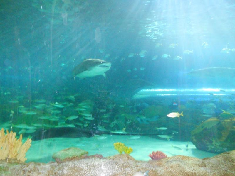 Toronto Aquarium 09210