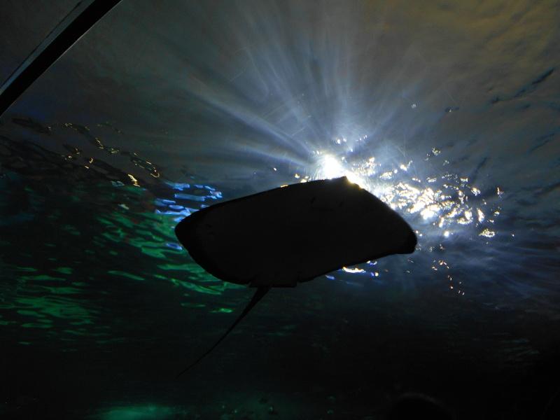 Toronto Aquarium 09710