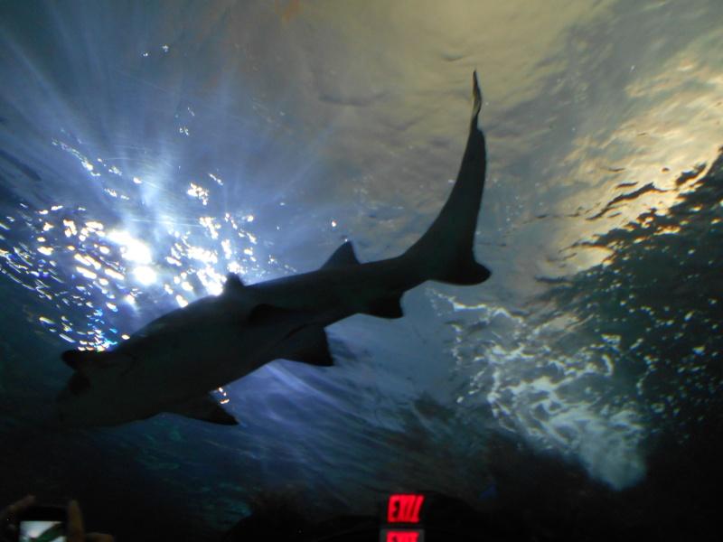 Toronto Aquarium 09910