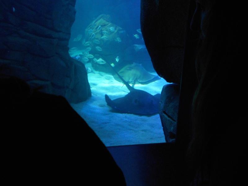 Toronto Aquarium 10410