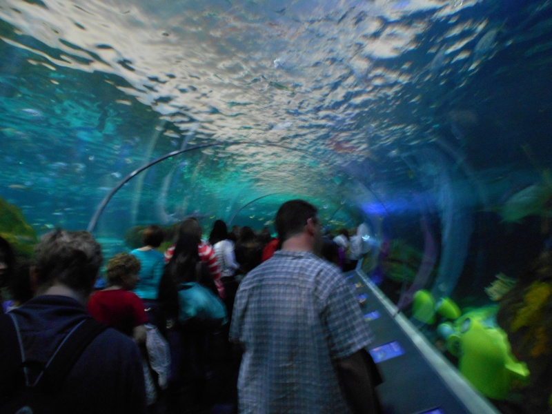 Toronto Aquarium 11210