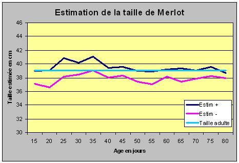 Avis aux amateurs Merlot11