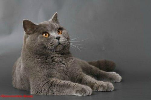 Каталог вяжущих котов 181dff10