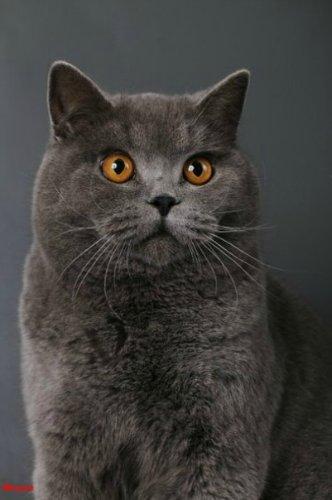 Каталог вяжущих котов A4297e10