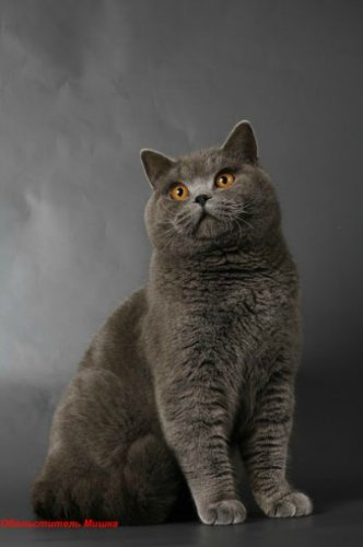 Каталог вяжущих котов A618ac10
