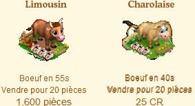 Limousin / Charolaise / Simmental / Bovin d'Halloween / Charolaise d'Amour => Boeuf Sans_364