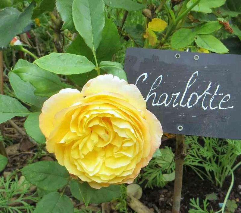 charlotte  - Page 3 Charlo10